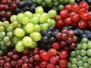 Le raisin frais est toxique pour le chien