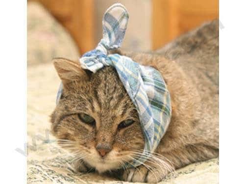 L'automédication est souvent responsable des intoxications à l'aspirine chez le chat