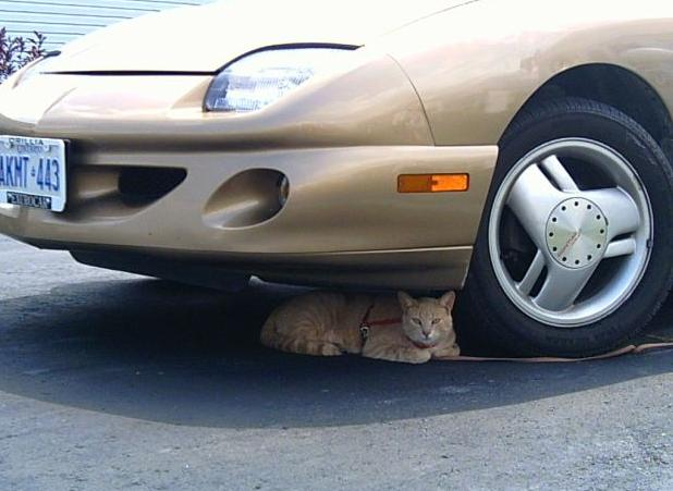 voiture chat